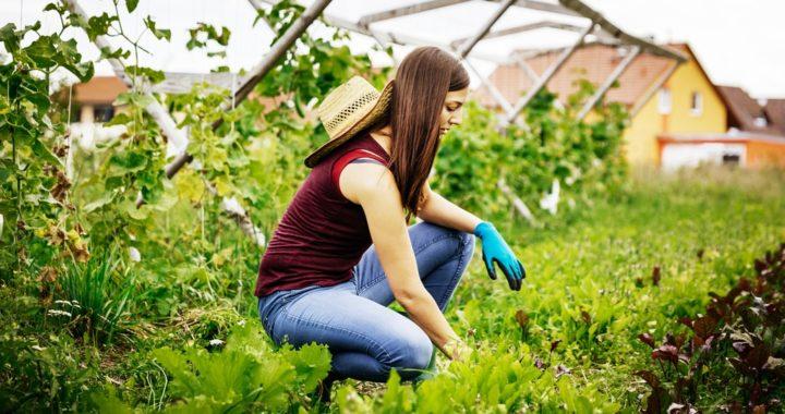 The Organic Revolution