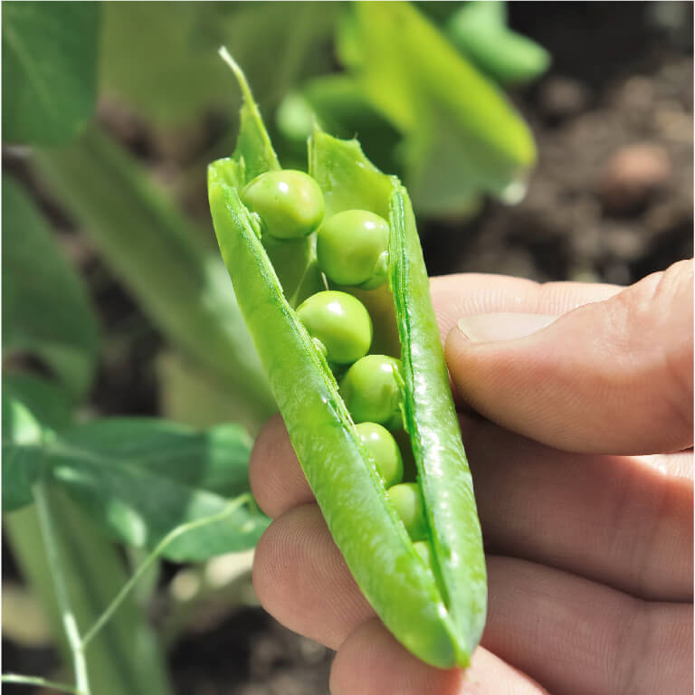 Dr Earth pea pod