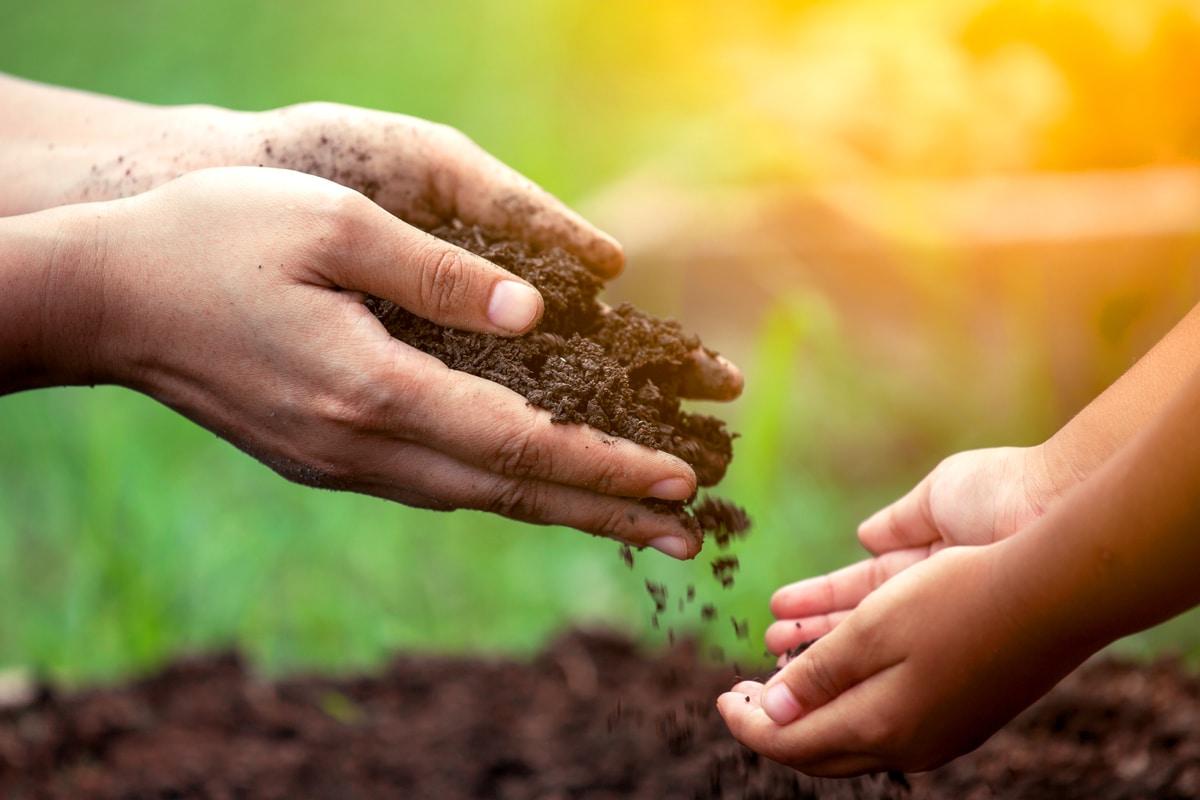Hands holding organic soil